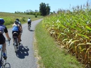Through the Tall Corn