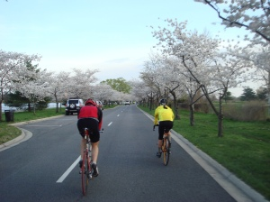 Evening on Hains Point with the cherry blossoms