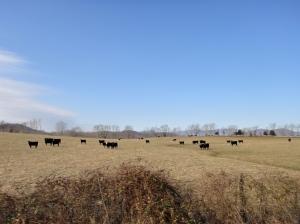 The fields are alive under bright sun
