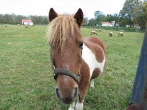 This little horse was very curious!